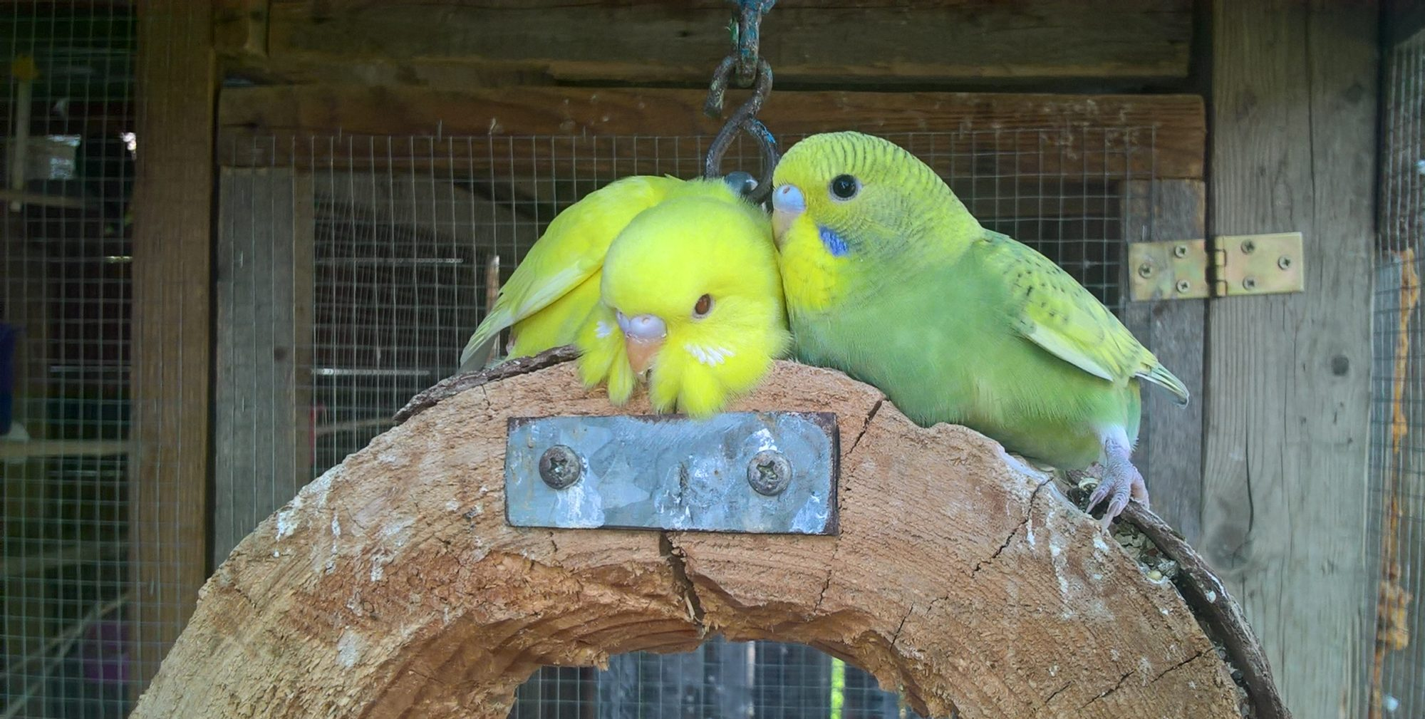 Moji papoušci